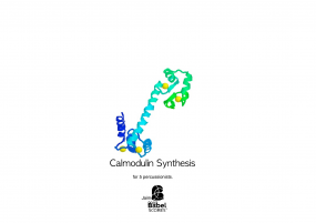 Calmodulin Synthesis